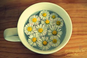 Cup of Daisies by JunsuiFox