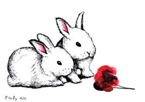 Two Little White Rabbits by Carles
