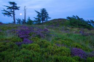Summer Moonrise, Auchterhouse Hill by Greg-McKinnon