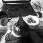 Cat, Coffee and Cookies (all you need for work) by andromeda-ek