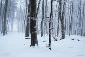 Winter Forest 2 by Regadenzia