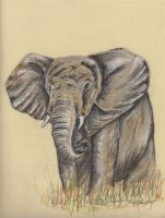 ANOTHER Elephant in Pastels by carriephlyons