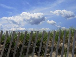 fence 2 by sarahbbutler