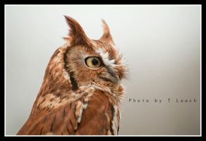 Wise Old Owl by tleach0608