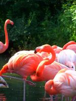The Great Pink Flamingo by cixelsiD-1