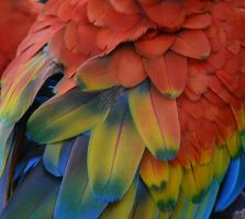 Colours Only a Parrot Knows by TaylorHollis