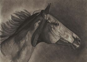 Horse Drawing 2 by FlyingFancy1