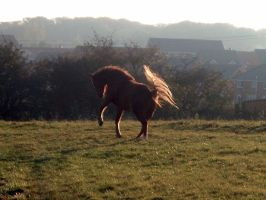 Horse stock by RSmales
