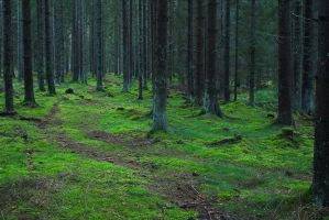 In the forest #2 by perost