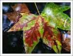 A Leaf in the City by neoweb