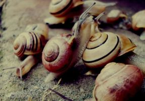 snails 4 by CocoaDesert