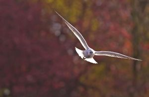 Mouette et chandon by Kriloner