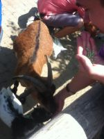 Day at the Zoo: Me Feeding the Goats by SithVampireMaster27
