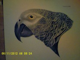 African Grey finished by KikiFlamer