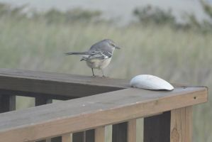 Bird On the Porch Railing,Looking Toward the Grass by Miss-Tbones