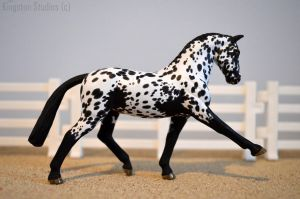 Appy Sport Horse by limitededitiongal