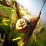 snail by eVike