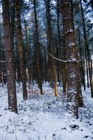 Snowy Woodland 19 by joannastar-stock