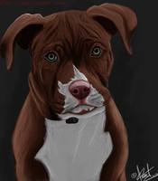 Little PitBull by flor-si