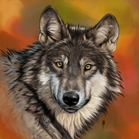 portrait of a wolf from the photo by athanasius-M