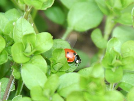 Ladybird in a load of green by buzi-bee
