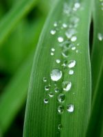 Water Droplets V by TriciaStucenski