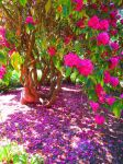 570. the pink flower tree by fr33d0m0f3xpr3ss10n