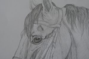Show Horse- close up section by folipoo