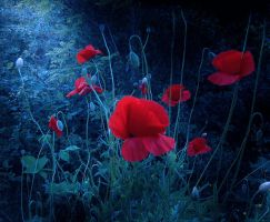 Poppy Natural Composition by Callu
