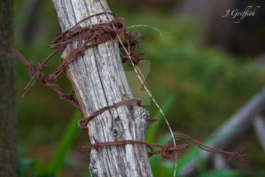 barbed wire by JGriffithPhotography