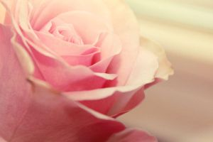 Vintage Rose by crystalcleargfx