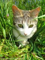 hiding in the grass by Mari-Ghostly