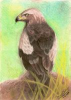 Eagle by equinoxchild