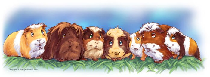 Guinea Pigs by Fany001