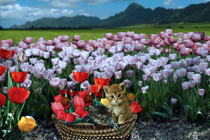 Terry's Tulips by Klooless1