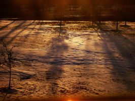 Autumn Sun in Late Winter by Pentacle5
