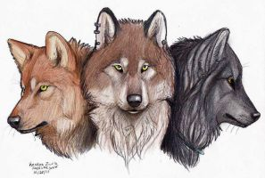 Sisterhood of the Pack by NatsumeWolf