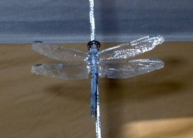 dragonfly by faeryfroggy-stock
