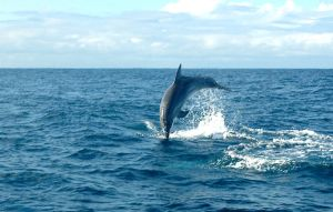 Jumping Dolphin by xjames7