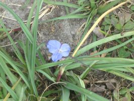 Day 31: Lonely Flower by Caedy