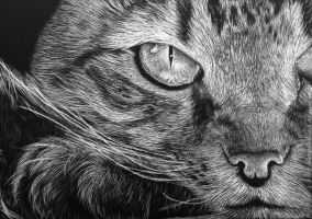 Cat Scratchboard by ninangame