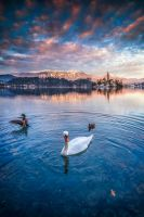...bled XXVI... by roblfc1892