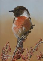 A stonechat (UK) by huckerback6