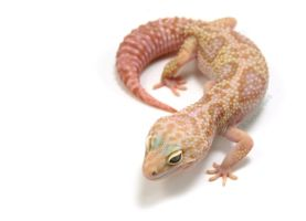 Test Shot: Mack Snow Rainwater by BB-Reptiles