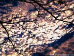 Nubes by BeccArt
