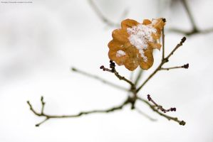 Warsaw 136 Winter leaves by remigiuszScout