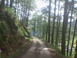 road trail going Eco Valley by Madette
