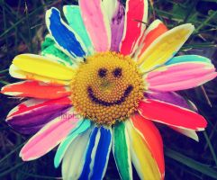 Rainbow daisy. by Lilith1995
