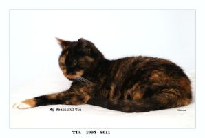 My Beautiful Tia RIP by Deb-e-ann