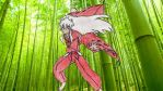 Inuyasha in Bamboo Forest by katerinaaqu